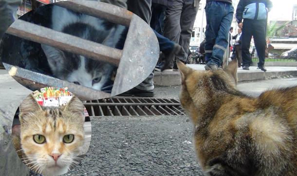 Anne kedi, yavrusunu mazgalın başında dakikalarca bekledi