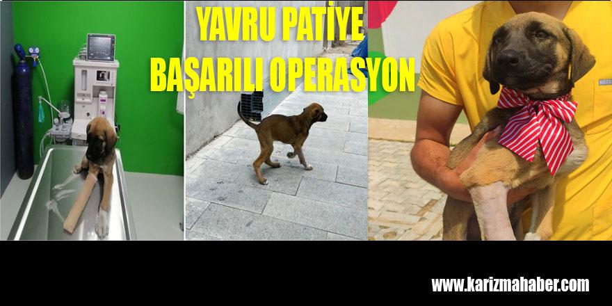 YAVRU PATİYE BAŞARILI OPERASYON