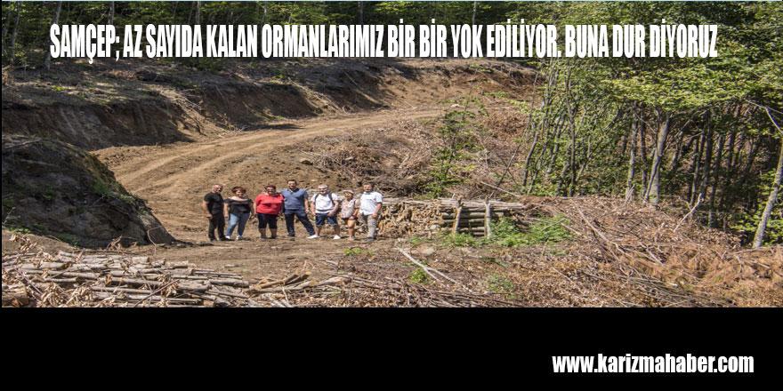 Özdağ; Samsun'un Akciğerleri Kocadağ'da Ağaç Kıyımına Son Verilsin!