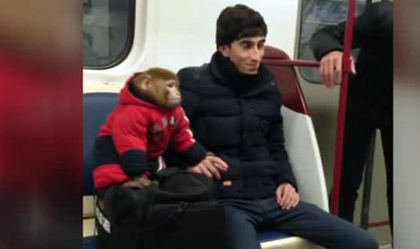 Metroda maymun var!